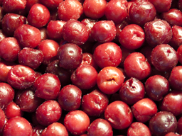 CHERRIES SOUR IQF 10KG