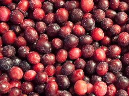 CRANBERRIES IQF 1KG SpeedyBerry