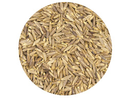 Cumin Seed Whole SS Indian 25kg